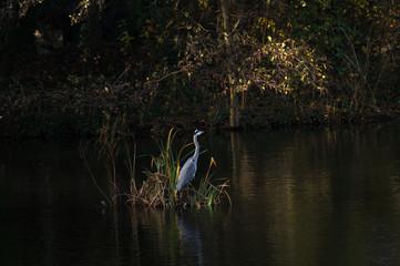 Crane Bird On Plants Amidst Lake