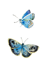 Set of watercolor butterfly Polyommatus dorylas, the turquoise blue butterfly of the family Lycaenidae