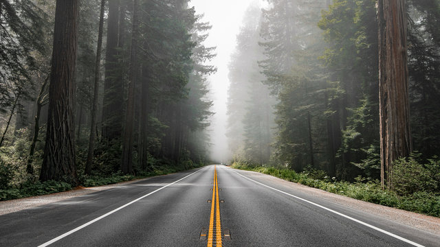 Scenic road in Redwood National Forest