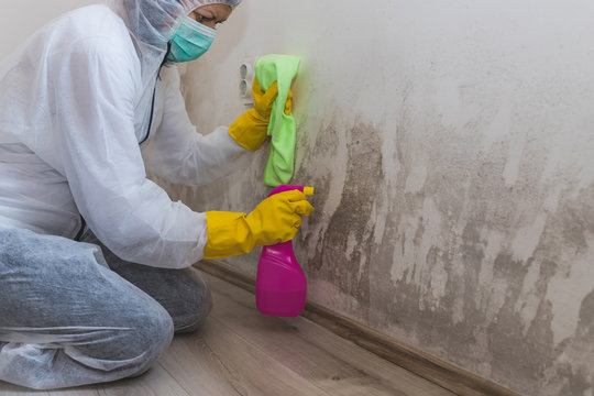 Close up of a worker of cleaning service removes the mold using antimicrobial spray and scrubbing brush.