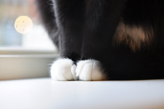 Cropped Image Of Cat Sitting At Home