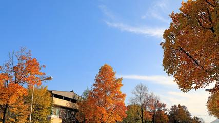 아름다운 가을 단풍과 하늘 Fotobehang