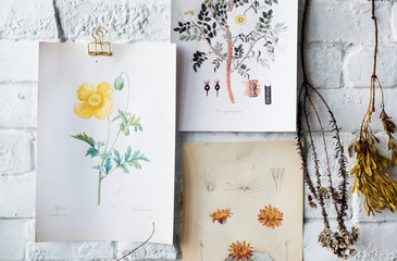 Wall Mural - Picture go hand drawing flowers collection in a frame