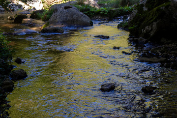 Fotomurales - river at sunset with golden reflections