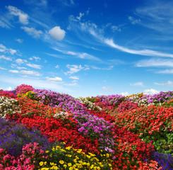 Fototapete -  flowers growing on the field