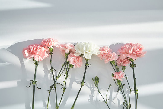 top view of pink and white carnations on white background with sunlight and shadows