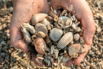 Seashells in the hands of a child, playing on a sandy beach. Discoveries of nature life. Happy vacation time near an ocean