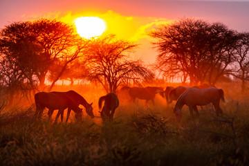 Photo sur Aluminium Rouge mauve Troupeau de chevaux en liberté dans une prairie au coucher du soleil