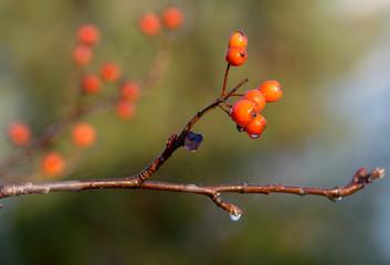 Obraz drzewo owocowe - fototapety do salonu