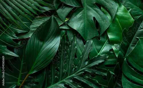 Wall mural closeup nature view of monstera leaf and palms background. Flat lay, dark nature concept, tropical leaf