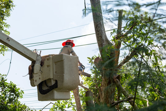 Technician staff cut trees from the electrical cable area to reduce power outages.