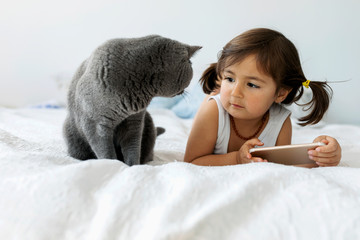 Portrait of little girl lying on bed with smartphone looking at grey British shorthair Fotoväggar