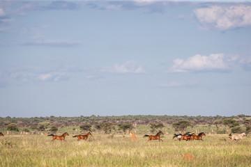 Troupeau de chevaux au galop dans la prairie
