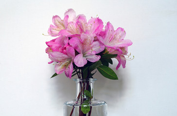 A small bouquet of pink azalea flowers in a clear vase