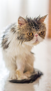 Close-up Of Wet Cat Sitting O N Floor At Home