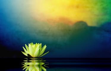 Poster de jardin Morning Glory Lotus flower with sunrise background.