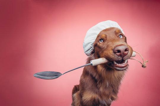 Hund mit Kochlöffel und Mütze