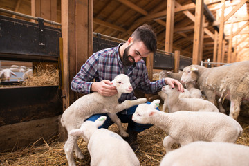 Happy farmer playing with animals at farm.