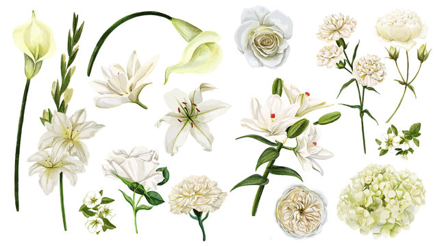 White flowers set, watercolor hand drawn vector