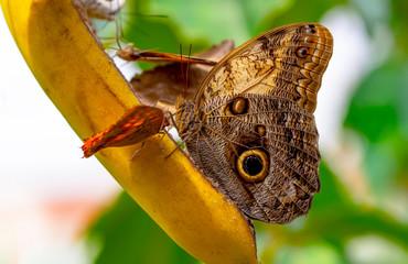 Spoed Fotobehang Vlinder Various butterflies feed in the Butterfly House
