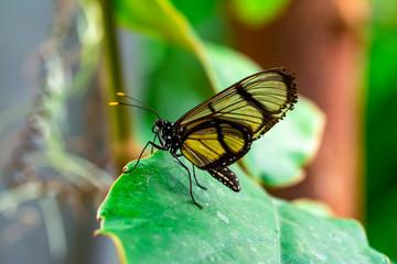 Spoed Fotobehang Vlinder Closeup beautiful butterfly in a summer garden