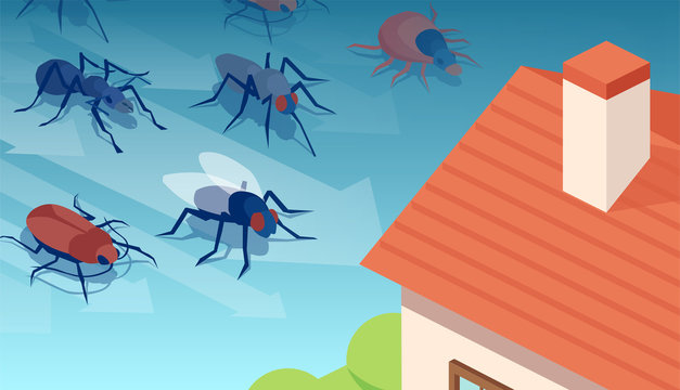 Vector of insects invading residential house
