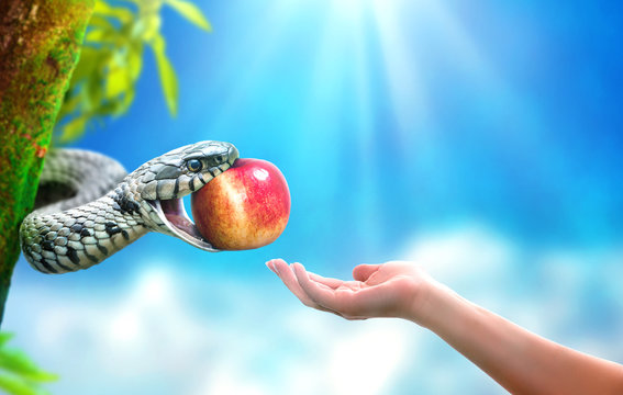 Snake in paradise giving an apple fruit to a woman