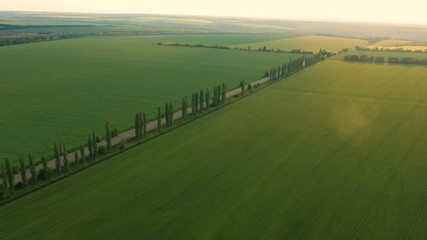 Wall Mural - aerial view of  early summer green fields and road going through