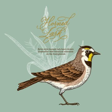 Retro style horned lark hand-drawn  illustration with botanical elements  on the background.