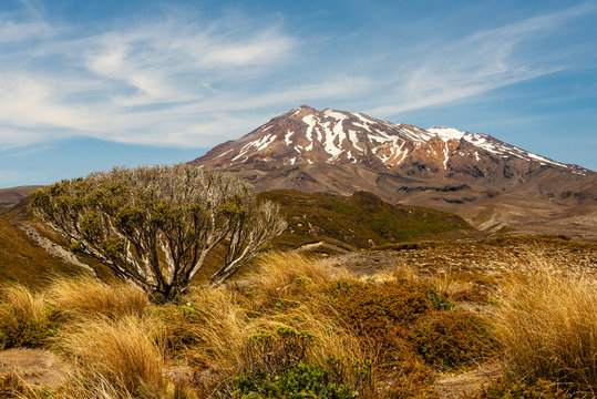 Footpath in the Tongariro national park, in the background view on the snow-dusted Mount Ruapehu