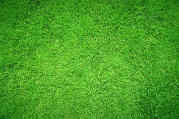 Green grass texture background, Top view of grass garden Ideal concept used for making green flooring, lawn for training football pitch, Grass Golf Courses green lawn pattern textured background.