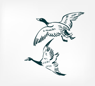 ducks fly vector illustration japanese chinese ink line sketch style