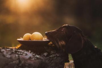 Cute dog in nature