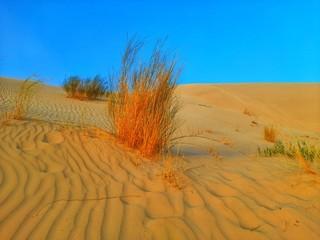 Photo sur Aluminium Rouge traffic sand dune in desert of Algeria