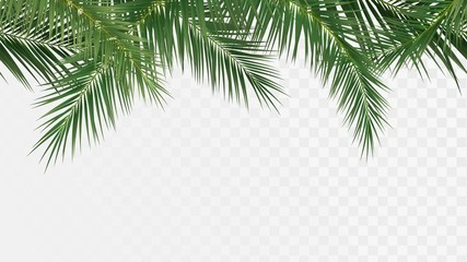 Wall Murals Pattern Palm branches seamless pattern, edge with tropical plants