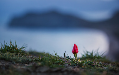 Landscape with a small red flower in the mountains