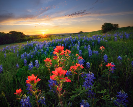 Texas Wildflowers at Sunset