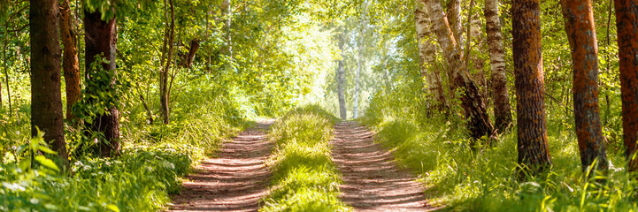 Fototapeten Straße im Wald Pathway in summer light forest