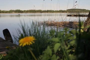 mazury woda jezioro kwiat trawa niebo krajobraz