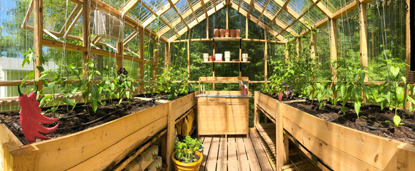 Fototapeta Panoramic view of a greenhouse with plants growing in June obraz