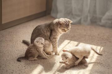 Foto auf AluDibond Katze Cat watches kittens play