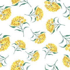 watercolor yellow flowers on a white background