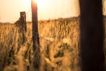 Obraz Płot w śłońcu późnego lata - fototapety do salonu