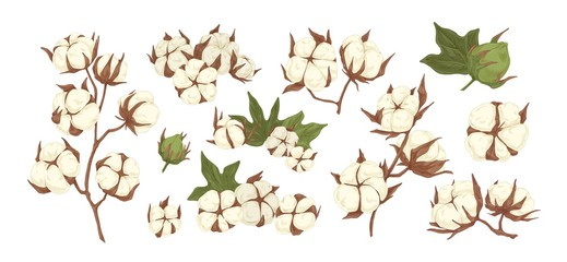 Collection of raw cotton branches, leaves, bolls and flowers isolated on white background. Realistic hand drawn agricultural and decorative plant. Vector illustration in flat cartoon style Fototapete