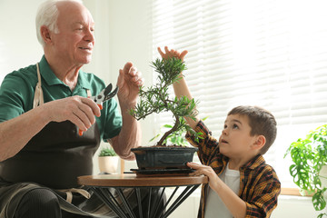 Acrylic Prints Bonsai Senior man with little grandson taking care of Japanese bonsai plant indoors. Creating zen atmosphere at home