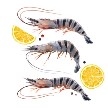 Beautiful stock illustration with watercolor hand drawn shrimps and lemon.
