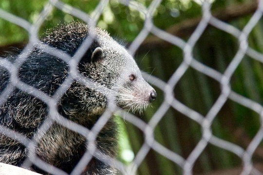 Mammal In Cage At Zoo
