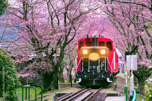 Wall mural Romantic train runs through tunnel of cherry blossoms in Kyoto, Japan.