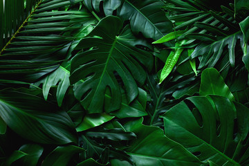 Fotomurales - closeup nature view of green leaf and palms background. Flat lay, dark nature concept, tropical leaf