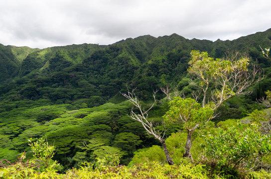 Pu'u Pia Trail Manoa Valley